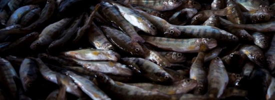 """""""Parla anche vicentino l'edizione 2013 di Slow Fish"""""""